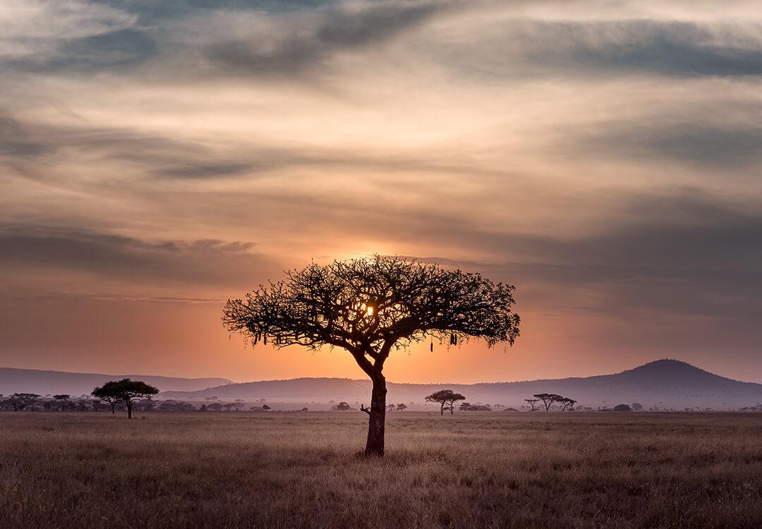 Rwandan tree